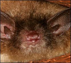 Bloomingdale bat removal