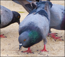 Bloomingdale bird control