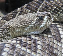 Bloomingdale snake removal